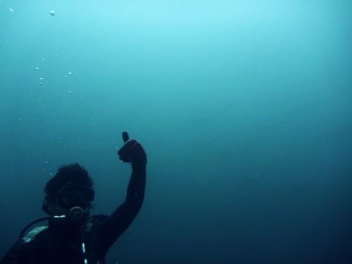 2013年神子元の海
