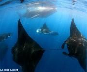 前の記事: 300匹のジンベエザメにマンタも加わってすごいことになってる