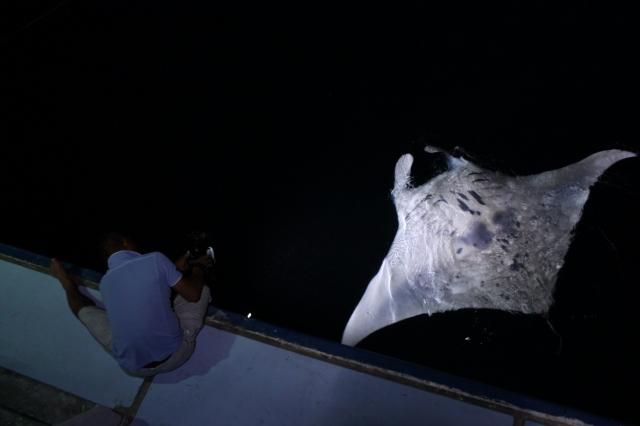 """夜の海に舞うマンタ!モルディブクルーズで船上から見られる""""ナイトマンタ"""""""