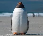 前の記事: ペンギン愛あふれる高砂淳二さんにほんわか10問インタビュー!