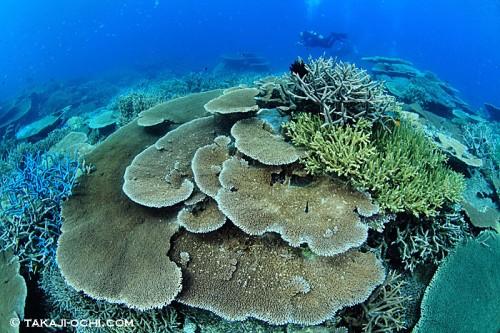 グレートバリアリーフのサンゴ礁(撮影:越智隆治)