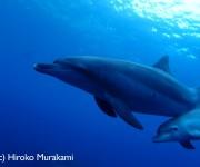 前の記事: 黒潮大当たり!絶好のコンディションでのイルカと泳ぐ御蔵島ツア