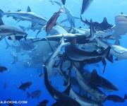 次の記事: サメが集まる狂乱の宴!オスプレイリーフのシャークフィーディン