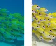 前の記事: 10月末までの期間限定!水中写真向け画像編集ソフト・SILK