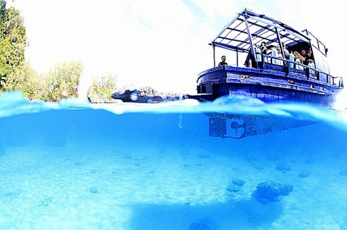 トンガのダイビング