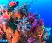 前の記事: 20分で聴ける「潜水事故防止安全講習会」東伊豆各スポットで開