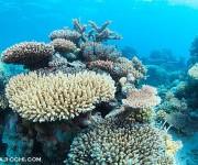 次の記事: 美しい!グレートバリアリーフのまさにグレートなサンゴ礁