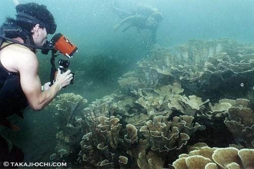 パプアニューギニア、ラバウルのサンゴ(撮影:越智隆治)