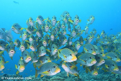 パプアニューギニアの海(撮影:越智隆治)
