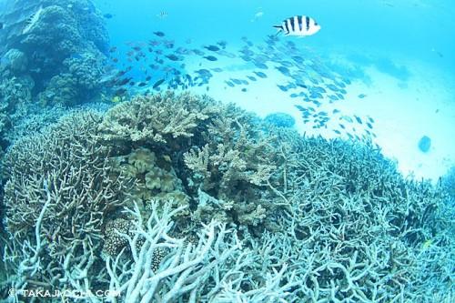エイジンコートリーフのサンゴ礁(撮影:越智隆治)