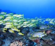 次の記事: 【モルディブ】ヨスジフエダイの群れが映える海