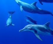 前の記事: 夢体験!宮古島の海で100頭近いシワハイルカと遊ぶ