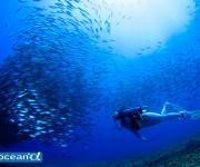 前の記事: 問題ないダイビングのはずなのに、なぜ!? 減圧症体験談