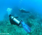 前の記事: 【アンケート】バディ潜水(セルフダイビング)したことあります