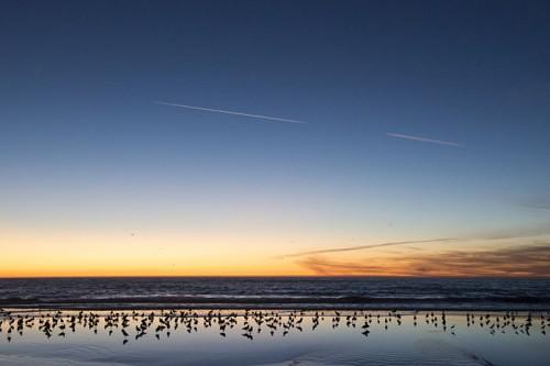 カリフォルニアの夕暮れ(撮影:岡田裕介)