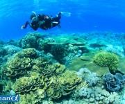 次の記事: 第15回潜水医学講座小田原セミナー開催のお知らせ