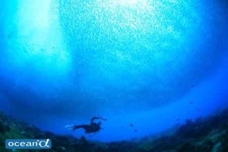 セブ島の魚の群れとカメラ女子ダイバー(撮影:越智隆治)