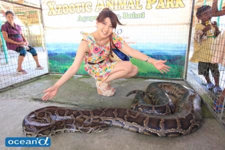 巨大パイソン(蛇)とモデル(撮影:越智隆治)