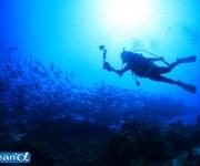 前の記事: ダイバーの98%が水中撮影をする時代 ~カメラのターニングポ
