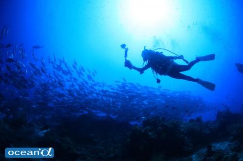 セブ島のフォト派ダイバーのシルエット(撮影:越智隆治)