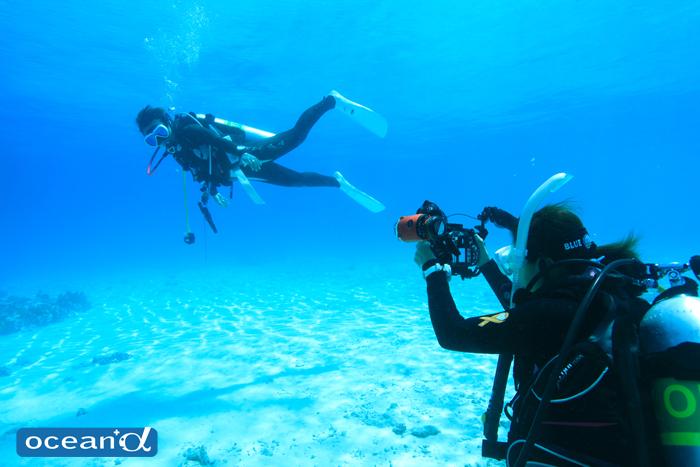 潜水事故が起こった時のバディやダイビングサークルの責任はどうなる?
