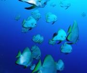 前の記事: JAUS第3回ダイビング活動研究シンポジウム開催のお知らせ