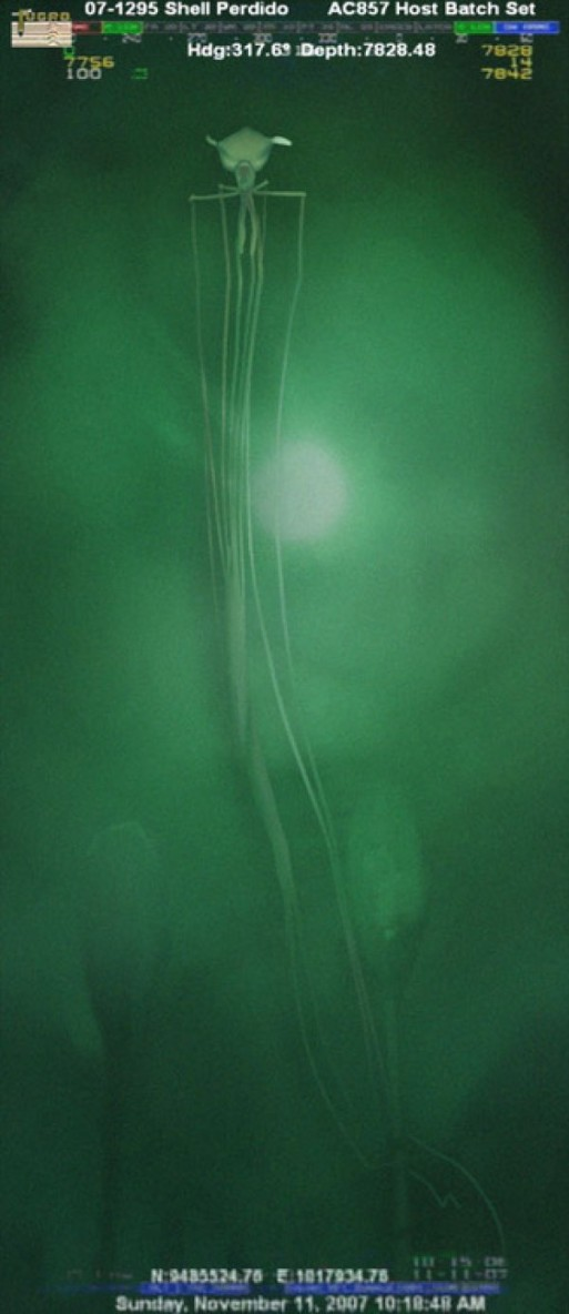 もはやエイリアン!深海で発見された奇妙すぎるイカ「マグナピナイカ」