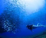 前の記事: ダイバーの命を守る最後の砦となるのか?新生DANジャパンへの