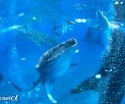 次の記事: 本日発売!「世界のダイビング完全ガイド」で感じた、ダイバーと