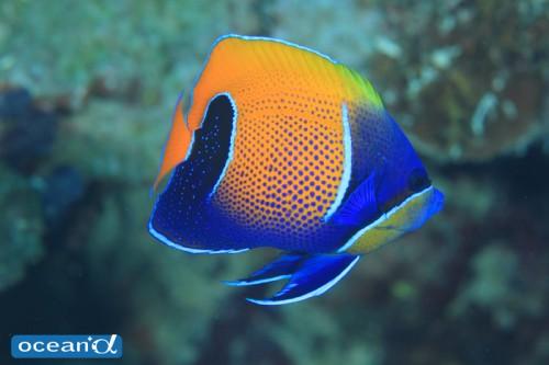 セブ島の魚(撮影:越智隆治)