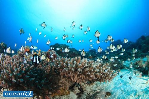 セブ島の海(撮影:越智隆治)