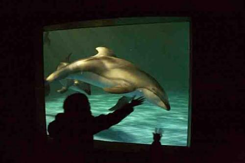 鴨川シーワールドの夜のイルカ