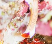 次の記事: ウミウシも躍動する、パプアニューギニアの海