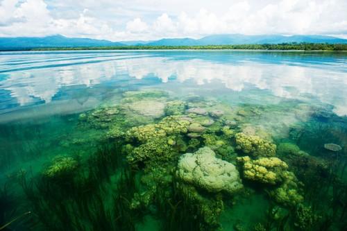 パプアニューギニアのサンゴ(撮影:岡田裕介)