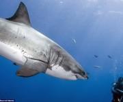 前の記事: もしもサメに襲われたら?サメから身を守る方法あれこれ