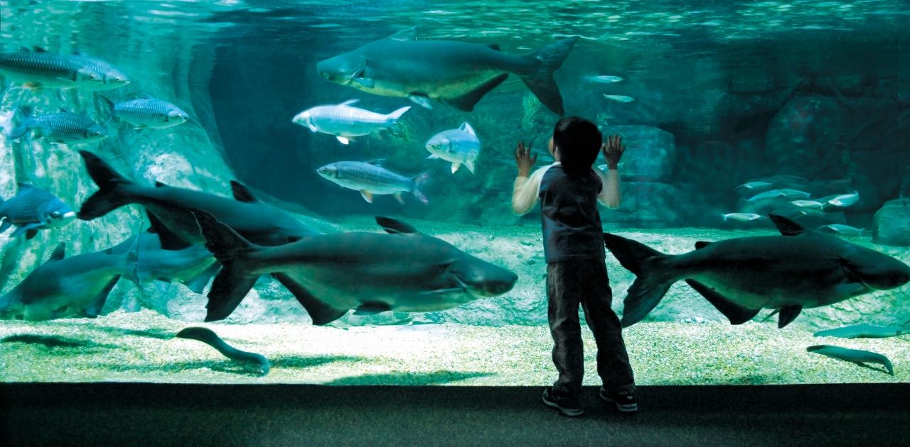 日本の原風景を楽しむための、淡水魚の水族館4選
