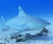次の記事: サメへの情熱を語ろう!第15回サメ談話会、開催