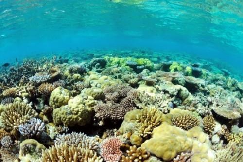 パラオの浅いサンゴ礁(撮影:石丸智仁)