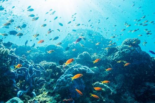 パプアニューギニアの魚の群れ(撮影:岡田裕介)