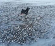 次の記事: 人間は丸ごと凍らないから2月だってダイビングできるよ!という