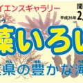 「海藻いろいろ-千葉県の豊かな海から-」