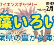 前の記事: 海藻でおしばのハガキを作ろう!「海藻いろいろ-千葉県の豊かな
