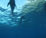 次の記事: 御蔵島のイルカは冬も島の周りにいるのか?