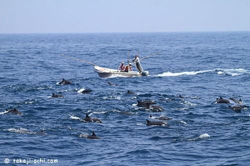 スリランカのイルカの群れ(撮影:越智隆治)