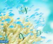 次の記事: ダイバーだからできる、サンゴ保全のボランティア活動