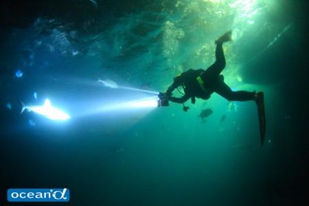 オーストラリア、GBRのナイトダイビング(撮影:越智隆治)