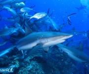 次の記事: バケアオザメの真実⁉ 2014年12月18日にサメ談話会開催