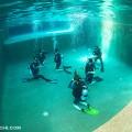 DEEP SEA DIVERS DENのプール講習(撮影:越智隆治)