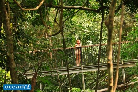 オーストラリアの熱帯雨林キュランダ(撮影:越智隆治)