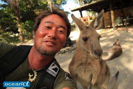 オーストラリアのトロピカルズーでのカンガルー(撮影:越智隆治)